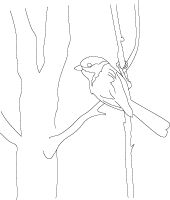 chickadee bird art sketch drawing to color or paint - Drawings To Paint